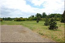 TL6804 : Hylands Park by Trevor Harris
