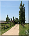 TL5245 : Poplars at Park Farm by John Sutton