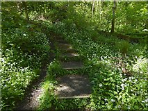 NS4175 : Overtoun House Nature Trail by Lairich Rig