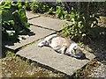 SH5573 : Cat in the Kitchen Garden by Richard Hoare