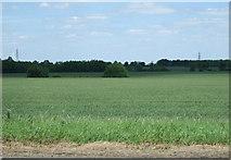 TL2460 : Crop field near White hall by JThomas