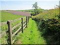 SJ5173 : Footpath to Maiden's Cross by Jeff Buck