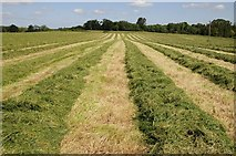 SO8843 : A silage cut by Philip Halling
