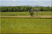 SO8843 : View over Pheasant Wood by Philip Halling
