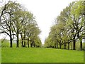 NZ1758 : The Avenue at Gibside  showing George Bowes  Palladian style chapel at the far end by Derek Voller