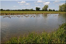 SO8843 : Geese on Croome River by Philip Halling