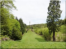 NZ1759 : View northwards of the Avenue at Gibside by Derek Voller