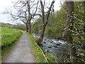 NZ1759 : Riverside path and the River Derwent,  Gibside estate by Derek Voller
