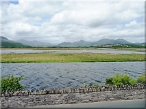 SH5838 : Corsydd Afon Glaslyn marshes by Christine Johnstone