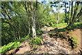 SJ4953 : The Sandstone Trail by Jeff Buck