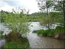 SH6541 : Stream from Coed Llyn Mair by Christine Johnstone