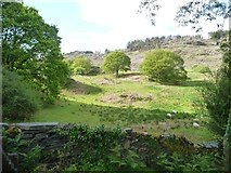 SH6441 : Sheep pasture, north of Tan y Bwlch station by Christine Johnstone