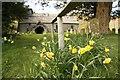 SO1953 : Daffodils Round the Handrail by Bill Nicholls