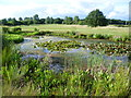 TQ3994 : Pond on the Royal Epping Forest Golf Course by Marathon