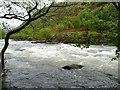 SH5946 : Afon Glaslyn, Aberglaslyn Pass, looking upstream by Christine Johnstone