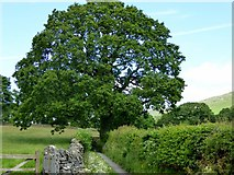SD6382 : Lane near Barbon by Philip Platt
