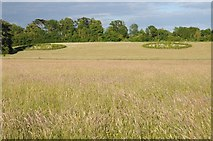 SO8845 : Parkland at Croome by Philip Halling