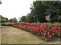 TQ3876 : Rose garden in Greenwich Park - reds and pinks by Stephen Craven