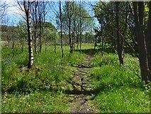 NS3977 : Woodland path by Lairich Rig