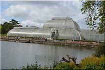 TQ1876 : Palm House, Kew Gardens by N Chadwick