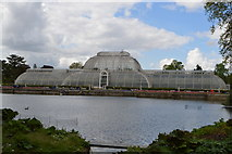 TQ1876 : Palm House, Kew Gardens by N Chadwick