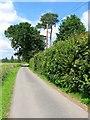 TQ3430 : Tillinghurst Lane by Simon Carey