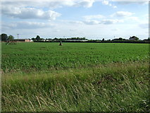 TF3324 : Crop field south of the A151 by JThomas