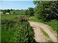 SK3146 : Track from Postern Lodge Farm by Christine Johnstone