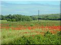 SE4105 : Dearne Valley summer by Steve  Fareham