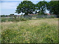 TQ1887 : Fryent Country Park next to the Jubilee Line by Marathon
