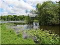 SO5063 : Berrington  Pool  in  Berrington  Park by Martin Dawes