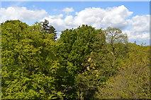 TQ1876 : View from treetop walkway, Kew by N Chadwick