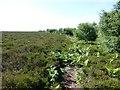 NU0724 : Track through bracken and heather by Russel Wills