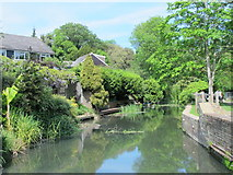 TL3706 : The River Lea (or Lee) upstream of the old mill by Mike Quinn