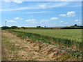 TQ6084 : Field of wheat sloping gently up from Bulphan Fen by Robin Webster