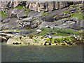 NG4819 : Seals in Loch na Cuilce by Oliver Dixon
