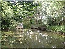 TL4352 : Weir near Hauxton Mill by Dave Thompson