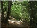 TQ3130 : Lower Walk Wood by Simon Carey