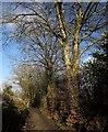 SX4272 : Footpath to the Tamar by Derek Harper
