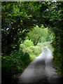 SS2118 : Lane to Welcombe Mouth, Devon by Roger  Kidd