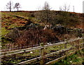 SS8695 : Remains of a building between Cymmer and Croeserw by Jaggery