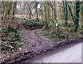 SO5207 : Entrance to Margaret's Wood Nature Reserve, Whitebrook by Jaggery