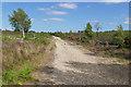SU9054 : Ash Ranges by Alan Hunt