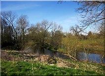 SE3953 : River Nidd, Ribston Park by Derek Harper