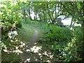 SX5547 : Eastern Hill Wood footpath by David Smith
