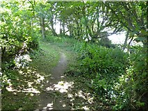 SX5547 : Eastern Hill Wood footpath by David Smith