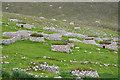 NF1099 : Cleits, Hirta by John Allan