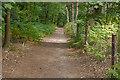 TQ0648 : Silver Wood, Albury Estate by Alan Hunt
