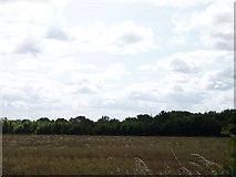 SO9250 : Band of trees seen across a field off Egdon Lane by Jeff Gogarty
