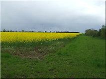 TM3984 : Field Of Rape by Keith Evans